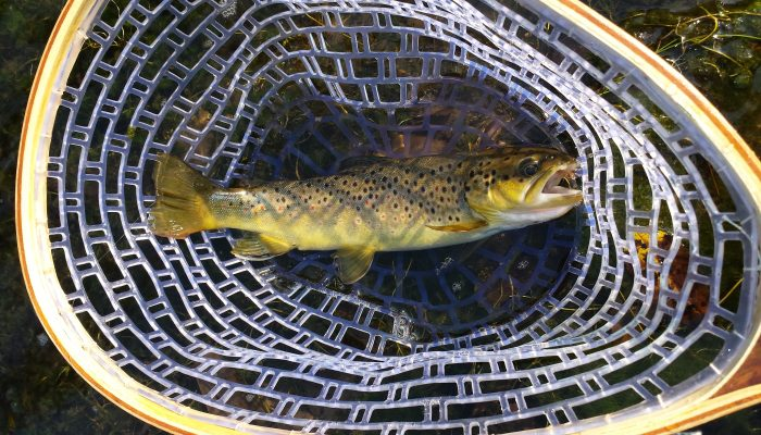 20150826 171234 700x400 - Driftless Fishers Photo Gallery