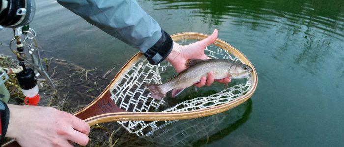 new7 700x300 - Photo Gallery - Driftless Fishers