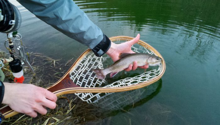 new7 700x400 - Driftless Fishers Photo Gallery